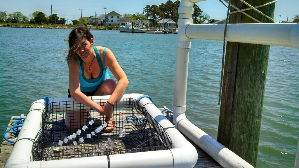 Plastic Degradation in Aquatic Environments